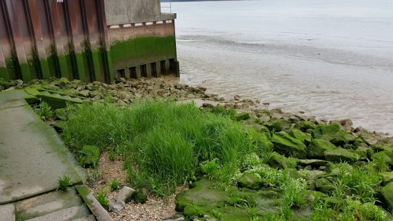 Žolė ir akmenys prie upės