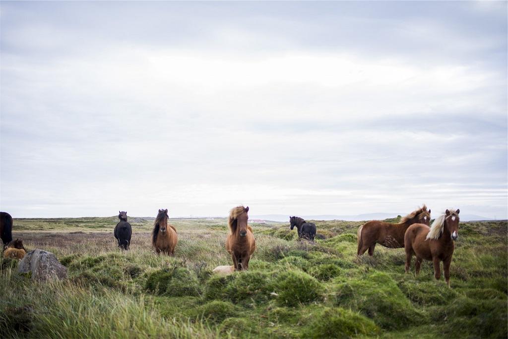 public-domain-images-free-stock-photos-animals-farm-horses