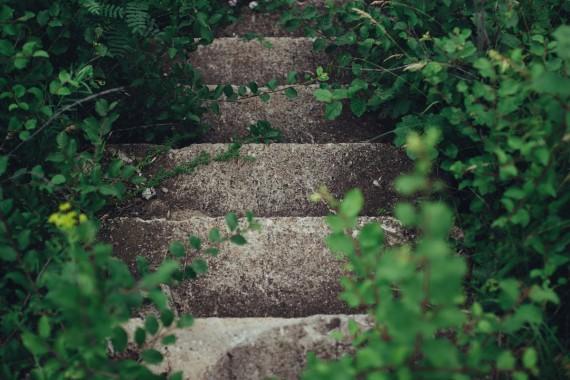 betoniniai laiptai apsupti lapų